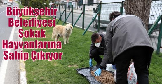 Büyükşehir Belediyesi Sokak Hayvanlarına Sahip Çıkıyor