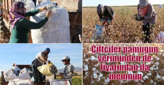 Çiftçiler pamuğun veriminden de fiyatından da memnun