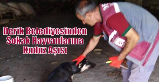 Derik Belediyesinden Sokak Hayvanlarına Kuduz Aşısı
