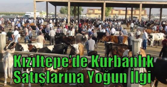 Kızıltepe'de Kurbanlık Satışlarına Yoğun İlgi