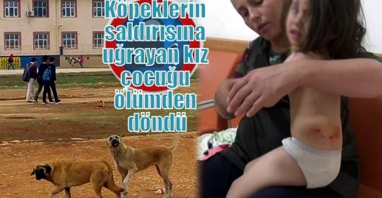 Köpeklerin saldırısına uğrayan kız çocuğu ölümden döndü