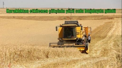Kuraklıktan etkilenen çiftçinin yüzü sulu buğdayda güldü