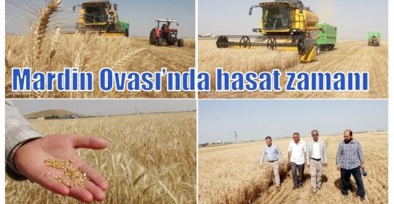 Mardin Ovası'nda hasat zamanı