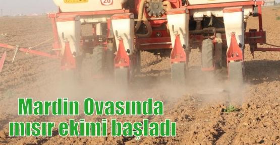Mardin Ovasında mısır ekimi başladı