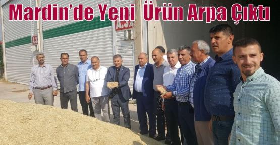 Mardin'de Yeni  Ürün Arpa Çıktı