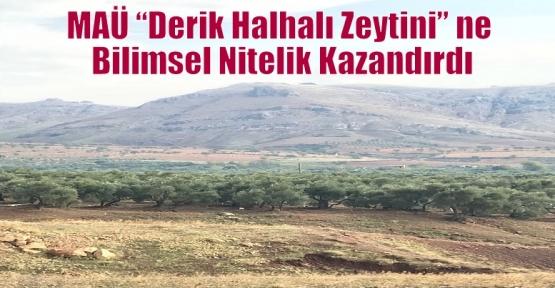 """MAÜ """"Derik Halhalı Zeytini"""" ne Bilimsel Nitelik Kazandırdı"""