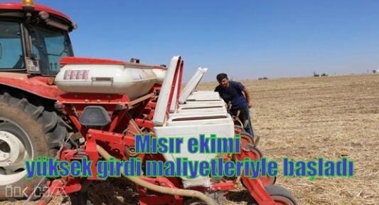 Mısır ekimi yüksek girdi maliyetleriyle başladı