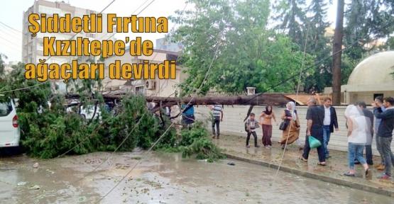 Şiddetli Fırtına Kızıltepe'de ağaçları devirdi