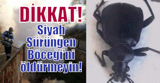 Siyah Sürüngen Böceği'ni öldürmeyin!
