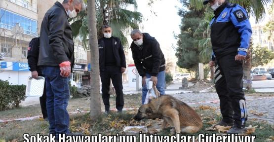 Sokak Hayvanları'nın İhtiyaçları Gideriliyor