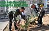 Artuklu Belediyesi'nden Ağaçlandırma Seferberliği