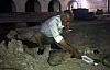 Derik'te 58 Yaşındaki Hayvansever Köpek yavrularına süt içirdi ve uyuttu