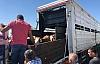 Derik'te 7'si kadın,20 Genç çiftçiye  büyükbaş hayvan hibe  verildi