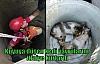 Kuyuya düşen kedi yavrularını itfaiye kurtardı