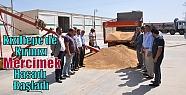 Kızıltepe'de Kırmızı Mercimek Hasadı...