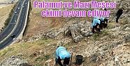 Palamut ve Mazı Meşesi ekimi devam ediyor