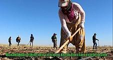 Kuraklıktan etkilenen çiftçinin kredi borçları ertelenecek