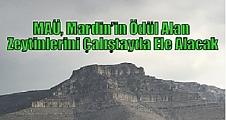 MAÜ, Mardin'in Ödül Alan Zeytinlerini Çalıştayda Ele Alacak