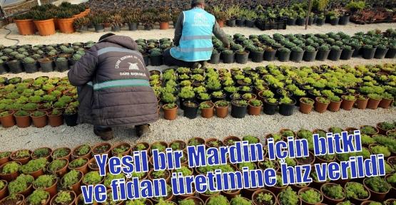 Yeşil bir Mardin için bitki ve fidan üretimine hız verildi